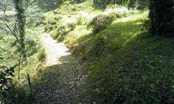 緑の小道.jpg